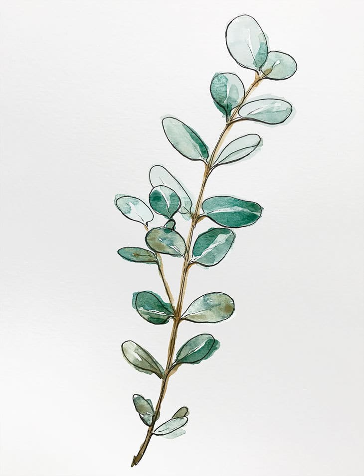 Beginners Line and Wash Eucalyptus Branch