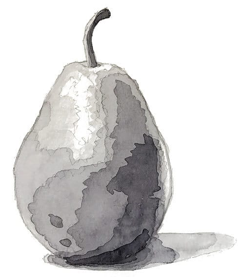 watercolor value study of a pear