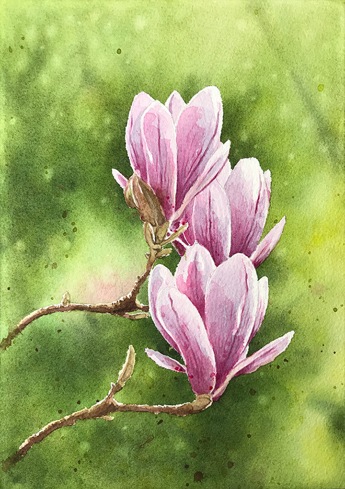 watercolor magnolia flowers finished painting