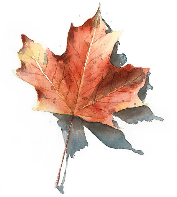 finished realistic watercolor fall leaf