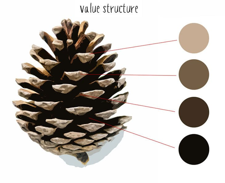 pine cone value structure