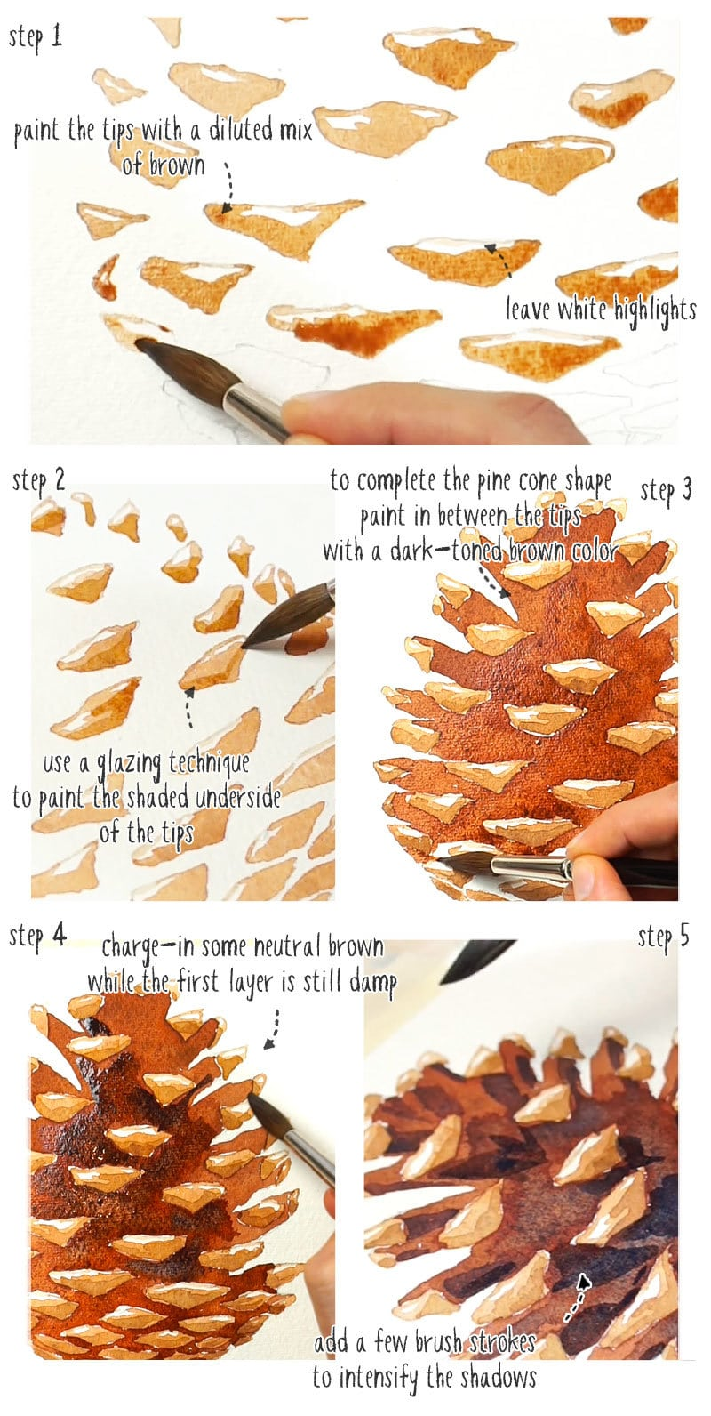 step by step watercolor pine cones painting
