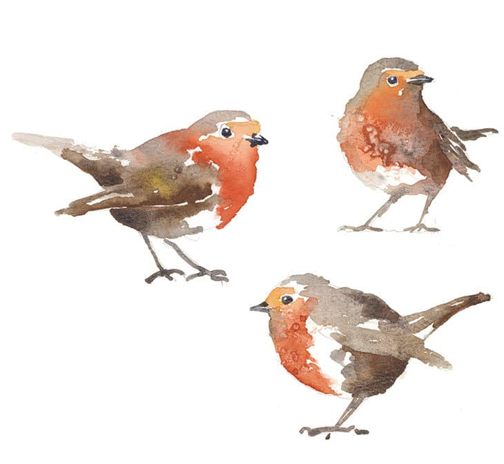 winter red robins watercolor
