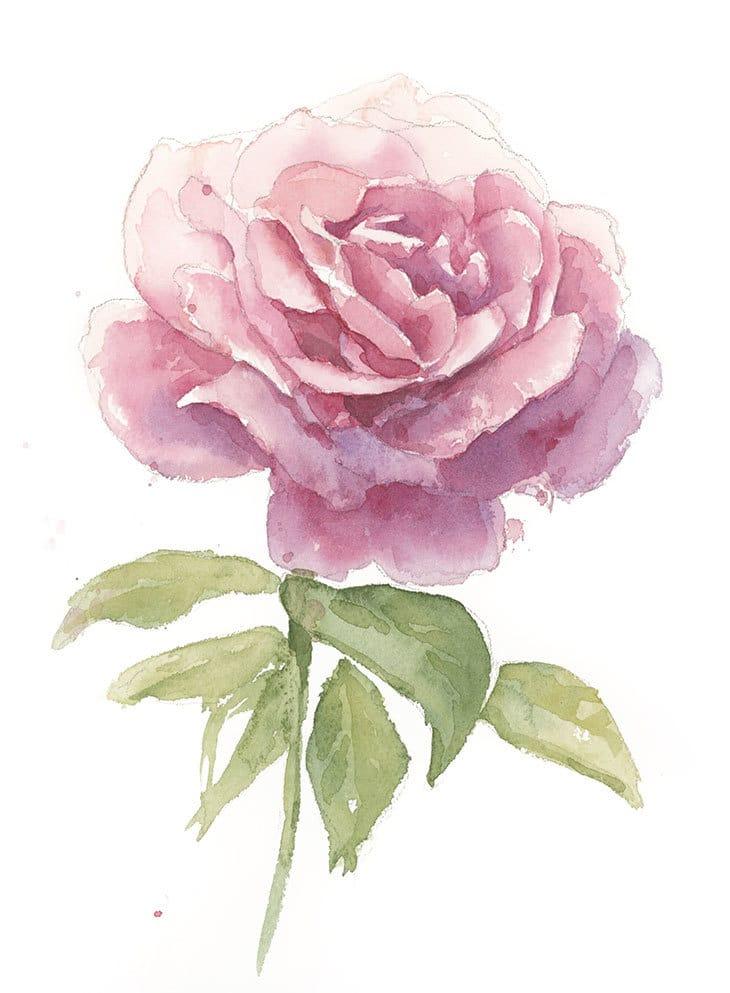 final watercolor rose painting