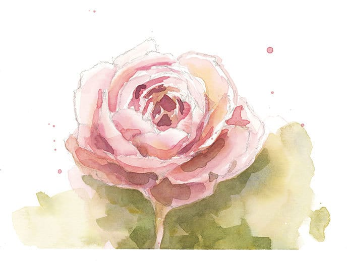 watercolor sketch of a rose