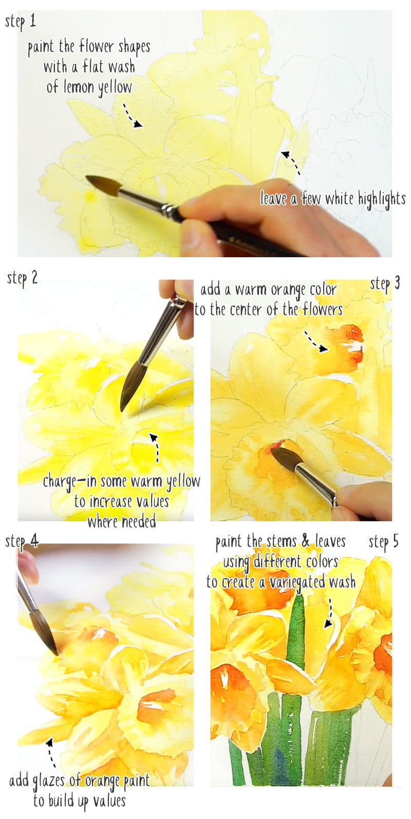 watercolor daffodils step by step tutorial stage 01